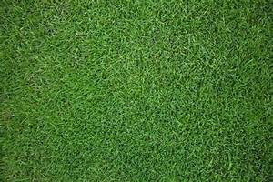 Green grass field background Photo | Free Download