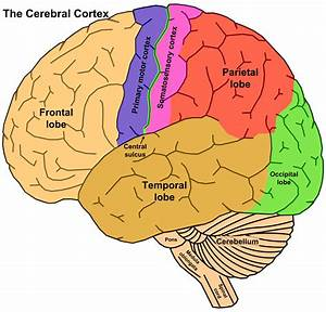 The Brain Concept with Synaesthesia | The Syn Moment