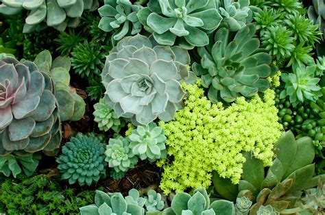 14 Cacti and Succulents Plants to Grow