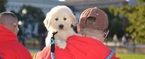 volunteer puppy raisers needed