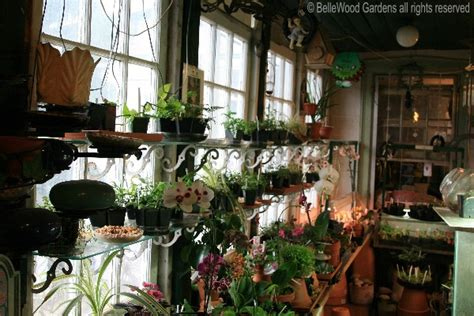 plants for sunroom plants for sunrooms wonderful circular window lets in light for a delicate cymbidium