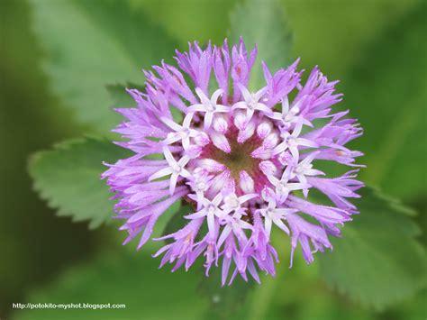 weeds with purple flowers purple weeds flower