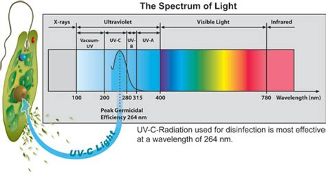 uv licht desinfektion uv water disinfection lowers pool chemical usage square pools 702 530 7331