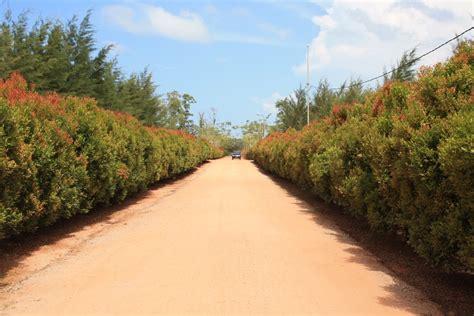 bangka botanical garden tempat wisata eksotis di kepulauan