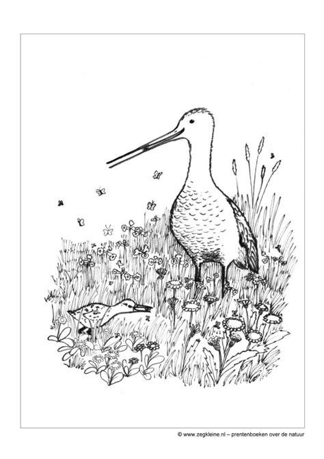 Kleurplaat Natuurmonumenten by Prentenboek Lente Voor Kleuters Zeg Kleine Grutto