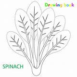 Spinach Drawing Coloring Vegetable Illustration sketch template