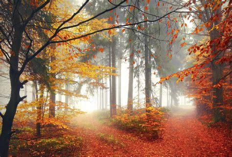 majestic forest digital photography kilian schoenberger