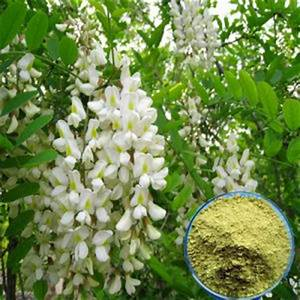 herb extract manufacturers