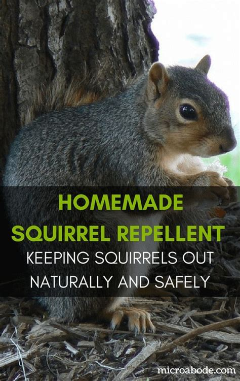 squirrel deterrent for gardens the 25 best squirrel repellant ideas on