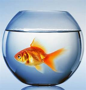 """The """"Fishbowl Philosophy"""": How to Change Your Perspective ..."""