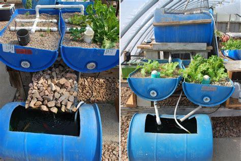 diy aquaponics systems  grow vegetables fish