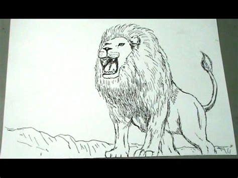 aprende  dibujar  leon africano paso  paso youtube