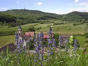 Blaue Lilie Freiburg : rhein rhein berg nge f hren naturschutzgebiete polder schleusen am oberrhein ~ Buech-reservation.com Haus und Dekorationen