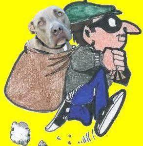 dog theft    increase  paarl paarl