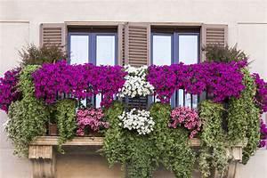 Plantes Et Fleurs Pour Balcon : quelle fleur pour balcon ~ Premium-room.com Idées de Décoration