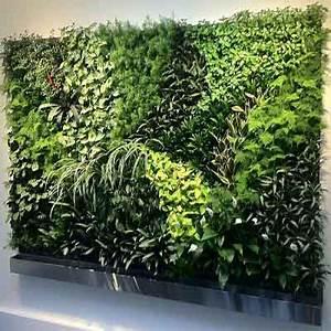 Mur Vegetal Exterieur : mur vegetal h rault et gard mur vegetal exterieur et mur ~ Melissatoandfro.com Idées de Décoration