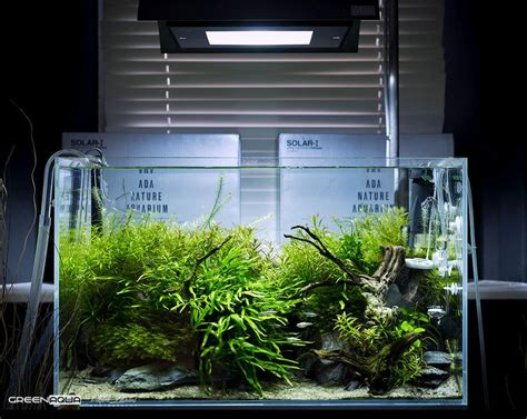Ada Aquascape by 1000 Images About Aquascaping Planted Tanks Aquariums