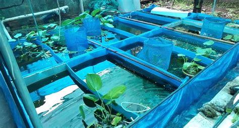start  small ornamental fish business  kenya
