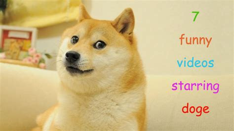 7 Funny Videos Starring Doge