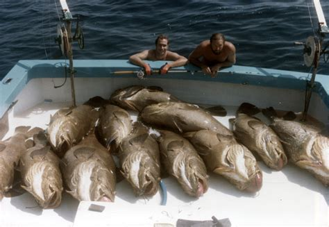 grouper goliath fish florida groupers harvest they catch jewfish keys flickr fishermen very anglers pay much want gather afraid aren