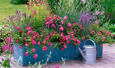 year plants for pots alan titchmarsh on colourful garden plant containers 1979