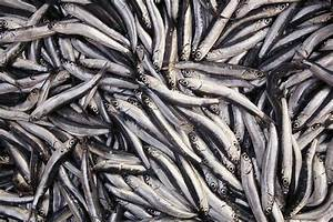 Would You Rather Eat Anchovies or Sardines? | POPSUGAR Food