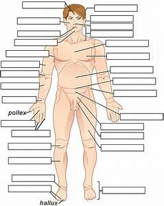 31 Label The Body Regions