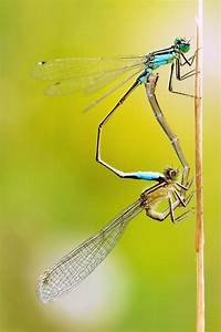 95 Best Images About Dragonfly On Pinterest