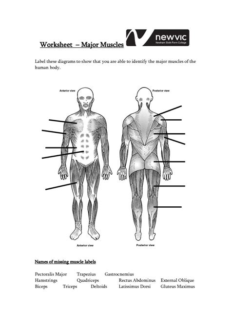 In the diagrams below, i'll be showing muscle groups in color, with a black line to show the forms that would show through the skin (i also show protruding bones that would do the same). Blank Muscle Diagram to Label Unique 13 Best Of Muscle ...