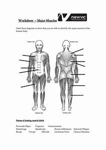 Blank Muscle Diagram To Label Unique 13 Best Of Muscle