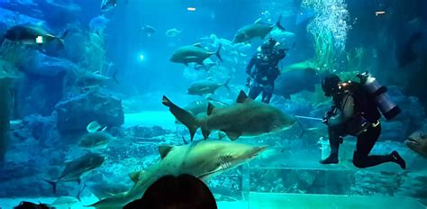 sea aquarium entrance fee skegness haeundae sea aquarium busan haeundae aquarium show time busan sea aquarium busan aquarium