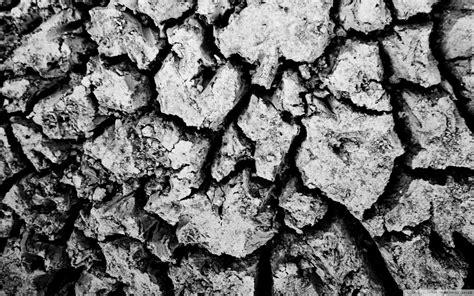 floor black  white nature wallpaper allwallpaperin