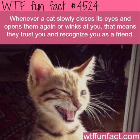 cat likes  wtf fun facts