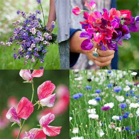 15 flower seeds to plant this