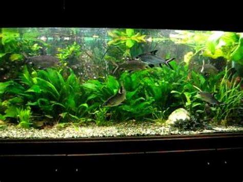 haibarben freshwater tank 1400 l 391 gallons