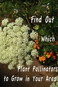 Find Out Which Plant Pollinators To Grow In Your Area