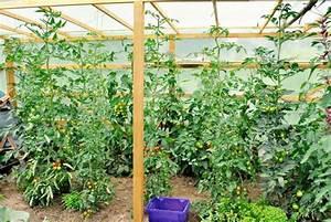 Pferdemist Für Tomaten : tomatenanbau 2 teil die pflege biogarten f llhorn ~ Watch28wear.com Haus und Dekorationen