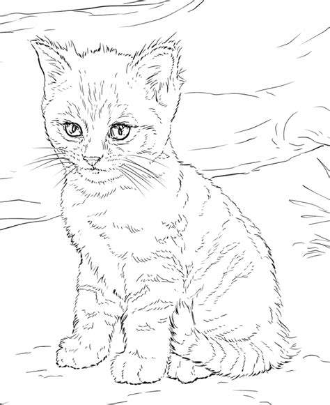 45+ Cute Cat Coloring Pages Pictures