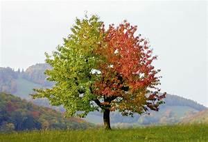 Baum Der Liebe : sabina roth kirschen baum fotografie 03 sabina roth ~ Eleganceandgraceweddings.com Haus und Dekorationen