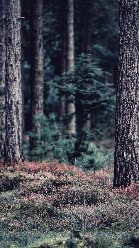 We hope you enjoy our growing collection of hd images to use as a background or home screen for your smartphone or computer. Bringing The Forest To You With 9 Free iPhone X Wallpapers | Preppy Wallpapers