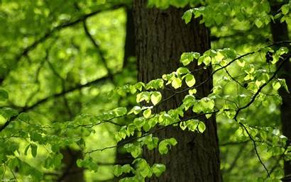 Leaves Wallpapers Nature Infrastructure Deviantart Greenblue Wallpapercave