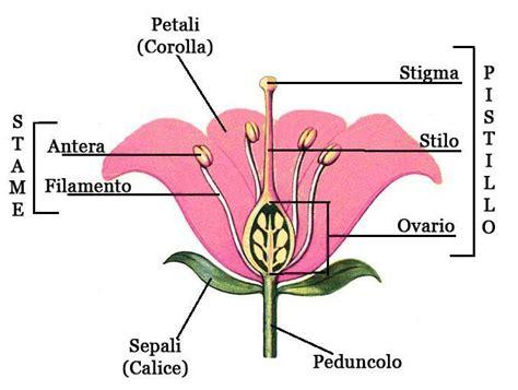 fiori ermafroditi fiori vivai frappetta roma