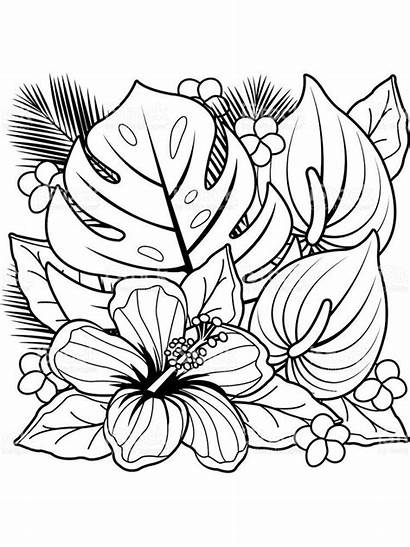 Coloring Pages Flower Printable Flowers Sheets Spring
