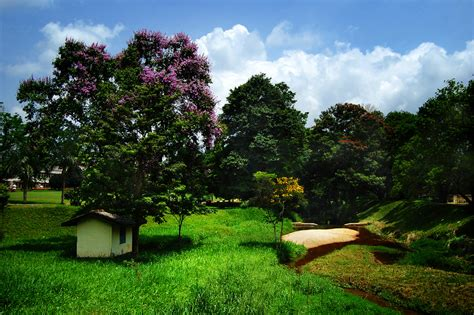 landscaping sri lanka file a landscape in peradeniya sri lanka jpg wikipedia