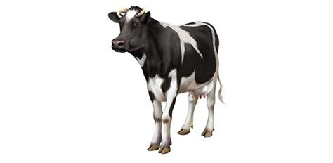 cow breeds flashcards by proprofs
