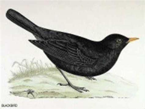 beatles blackbird youtube