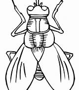 Coloring Bug Pages Printable Insect Getdrawings Insects Getcolorings sketch template