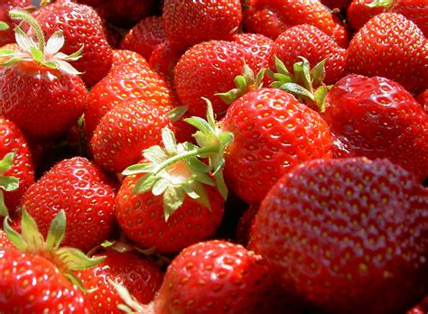 when is strawberry season strawberry season over a hundred years ago
