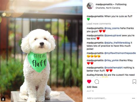 create  successful instagram account   dog