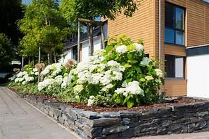 Weidenruten Zum Pflanzen Kaufen : pflanzen gartenbau leufgen ~ Lizthompson.info Haus und Dekorationen